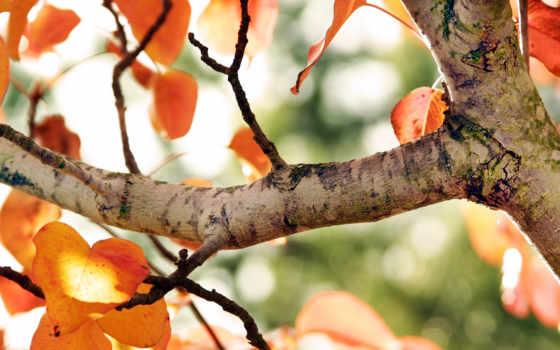 дерево, пасть, природа
