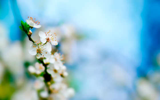 весна, лепестки