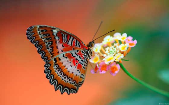 бабочка, цветы, крылья, макро, нояб,