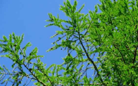 фото, дерево, awaan