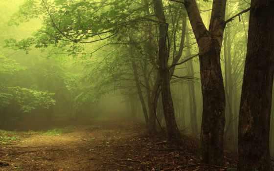 лес, misty, зелёный, pinterest, природа, landscape, bosques, река,
