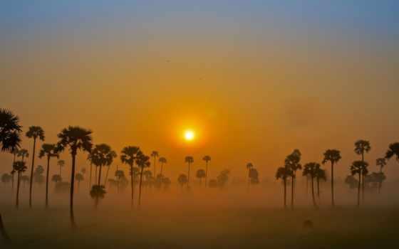 туман, sun, favorites, images, рассвет, коллекция, trees, flickr,