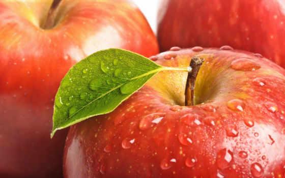 природа, cvety, яблоки, zhivotnye, apple, капли, позитивные, транспорт, макро, еда, branch,