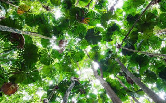 national, daintree, roccarainola, park, queensland, fellino, tripadvisor, австралия, palm, photos,