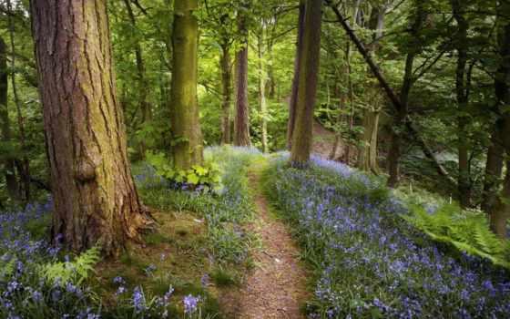 лес, купить, место, отдых, отдыха, отели, сети, подмосковье, heliopark,