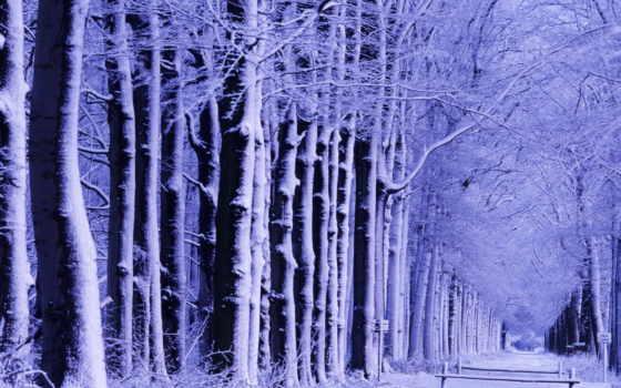 лес, winter, зимние, дорога, trees, сказочный, фиолетовым, снега, оттенком,