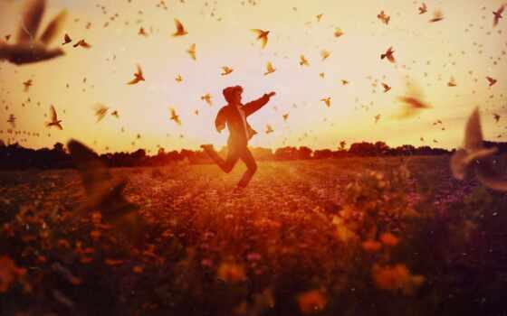 птица, sun, happy, поле, running, парень, мужчина, human, тепло