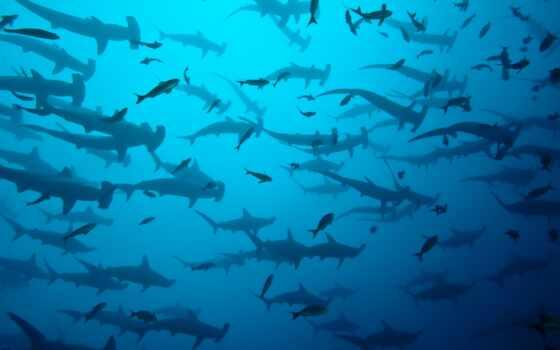 остров, акула, coco, hammerhead, costa, rica, dive, ocean, море, underwater