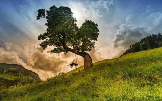 дерево, hang, качели, shrubland, стефан, thaler, фотограф