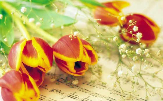 тюльпаны, cvety, цветов