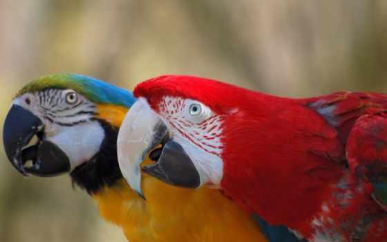 количество, попугаи