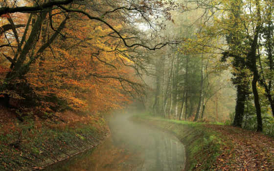 осень, листья, trees, лес, hdr, прогулка, природа, река, water, картинка,