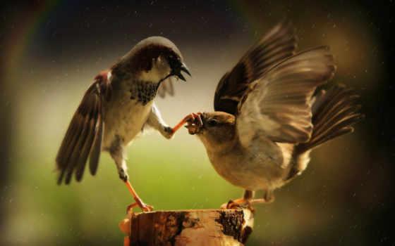 смешные, заставки, птицы