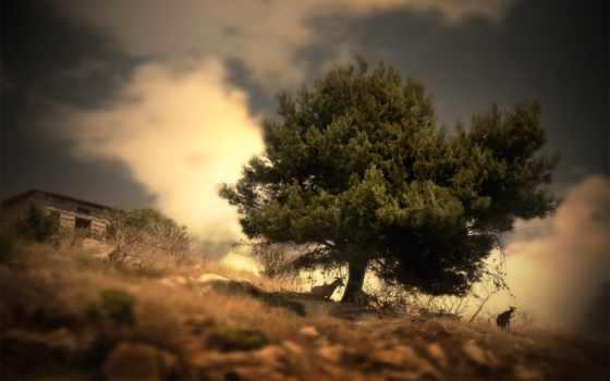 дерево, природа, landscape, одинокое, zhivotnye, категория, совершенно, под, поле,