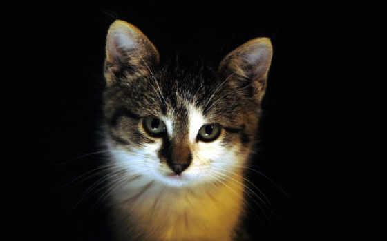 fone, черном, black, котенок, zhivotnye, кошки, кот,