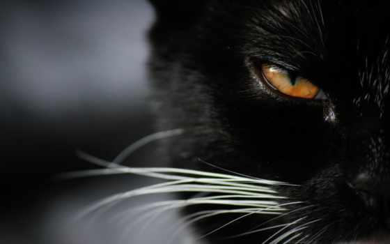 кот, красивый, black, iphone, компьютер, ноутбук, android, глаза