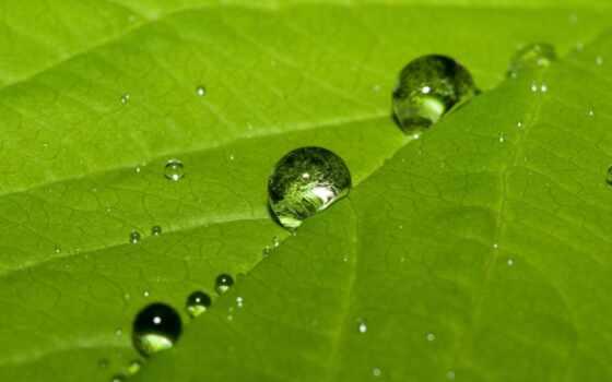drop, природа, роса, лист, ноутбук, зелёный, цветы, makryi, fond, web, стебель