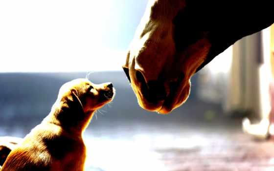 щенок и лошадь
