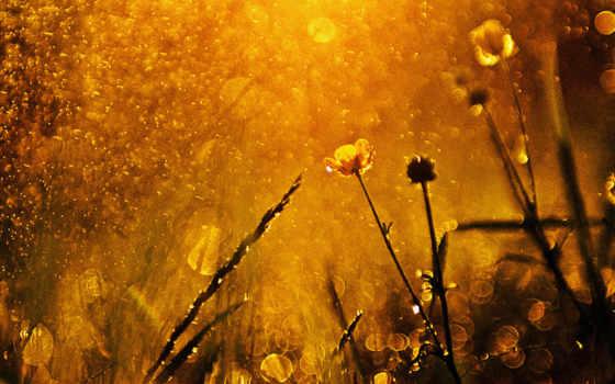 дождь, солнца, землю, again, теплые, озарили, дожди, проливные, rays, national, geographic,
