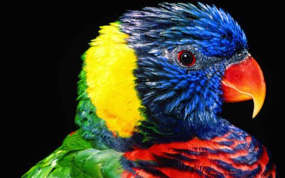 perroquet, фото, perroquets, аквалангисты, les, publié, par, fonds, centerblog, cacatoes,
