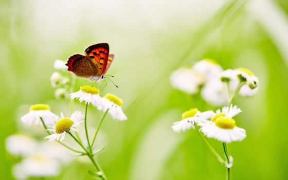 цветы, бабочка, desktop, flowers, resolutions, photography,