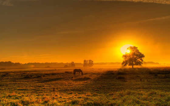 лошадь, закат, поле, пастбище, трава,