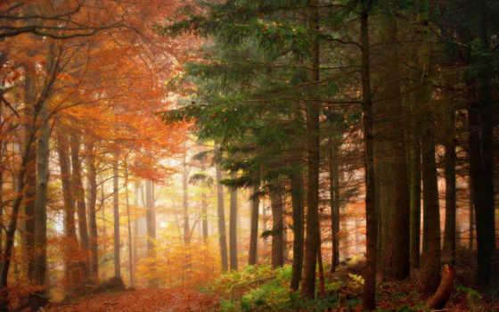 лес, лиственный, хвойный, между, border, other, conifers,