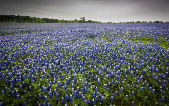 flores, красивые, pinterest, cvety, летние, jardinería, fondos,