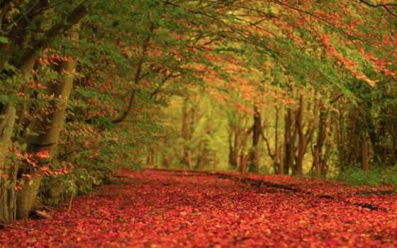 ковёр, осень, природа, trees, листва,