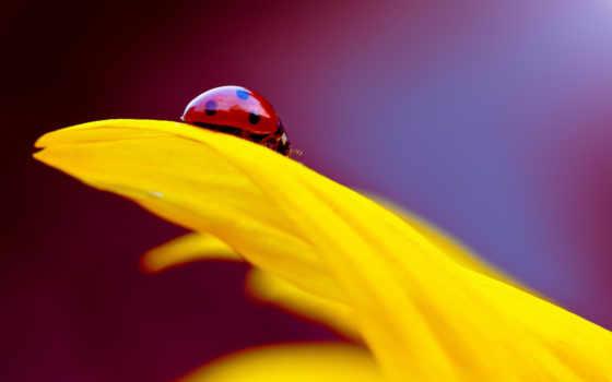 изображение, фон, desktop, ladybug, тв,