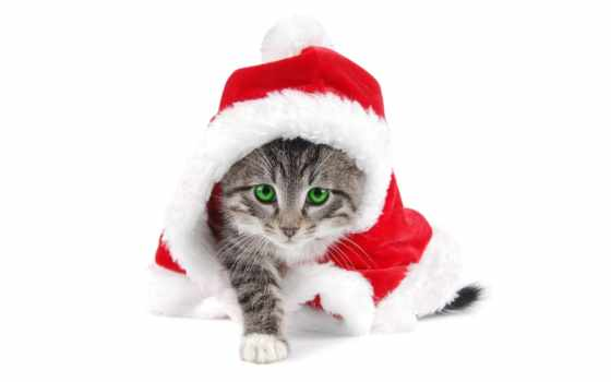 новогодние, кошками
