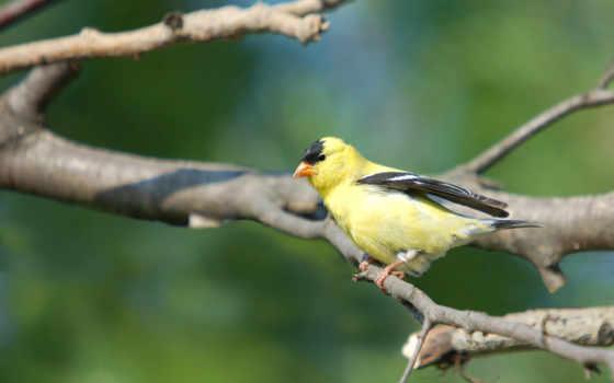 птицы, фото