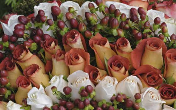 розы, белые