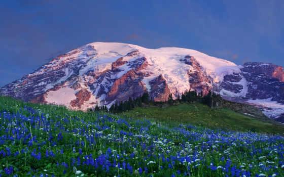 поляна, снег, цветы, вершина, горы, пейзажи, hallpic,