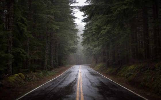 дорога, взгляд, summer
