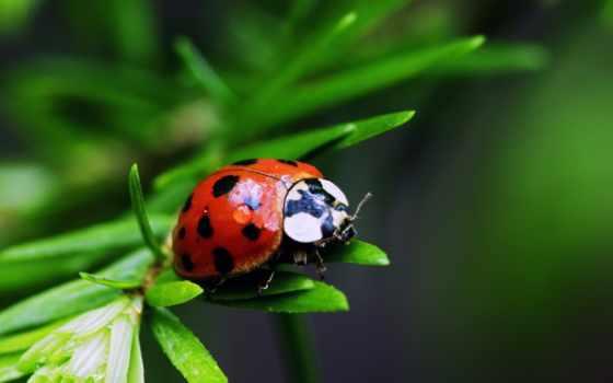 насекомые, красивые, нашей