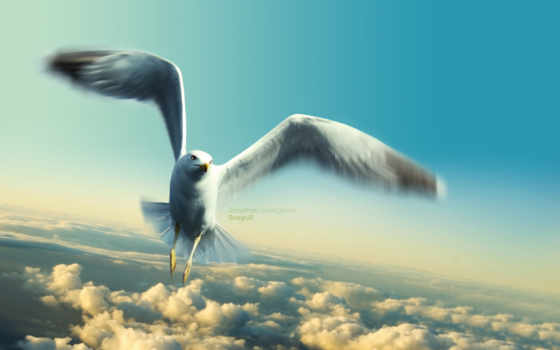 ливингстон, jonathan, seagull, имени, чайка,