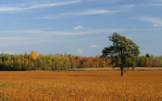 поле, осеннее, осень, дерево, time, года, банка, лес, леса,