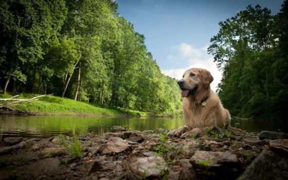 собака, природе, отдых, белая, собакой, хаски, iguana, питомцем, любимым, детёныш, когда,