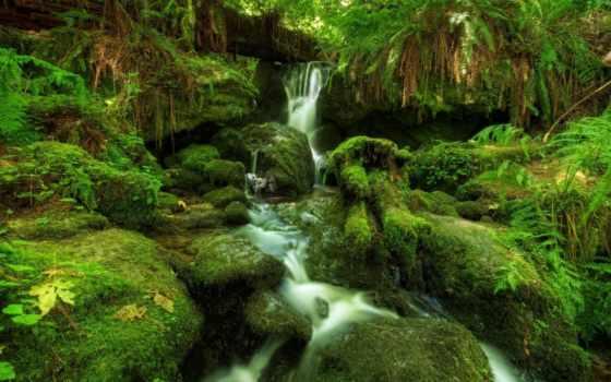 лес, папоротник, водопад, мох,