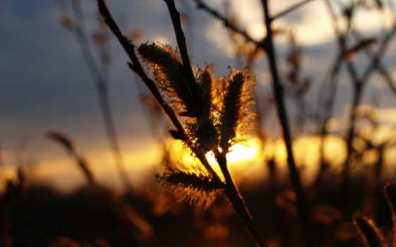 вечера, вечер, хорошего, закат, весна, красавица, приятного, поздравления, только, хороший, стихах,