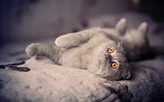 кот, мишка, плюшевый, телефон, кошки, котята, красивые, серый, portrait, pour,