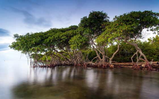 леса, мангровые, лесов, мангровых, проект, пилот, развернулся, мьянме, конечная, purpose, кампаний,
