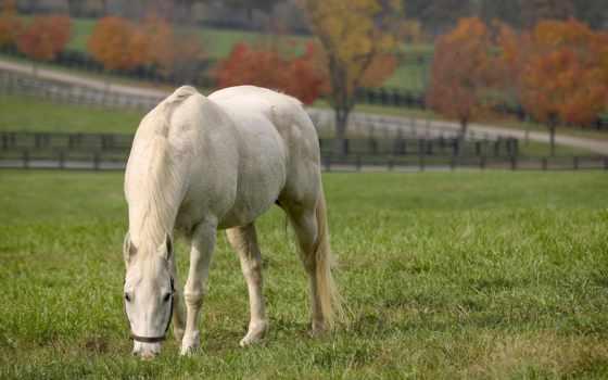 лошади, красивые