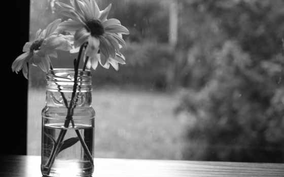 monochrome, flowers, оттенки, desktop, почти, share,