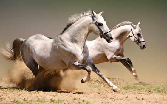 лошади, скачущие, лошадей