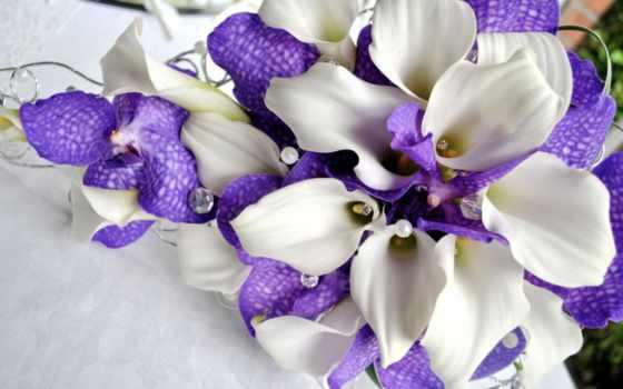 орхидеи, цветы, каллы