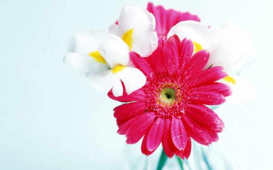 цветы, devushki, любимой