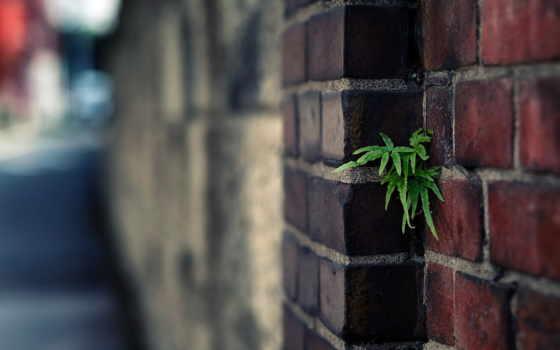 стена, широкоформатные, brick