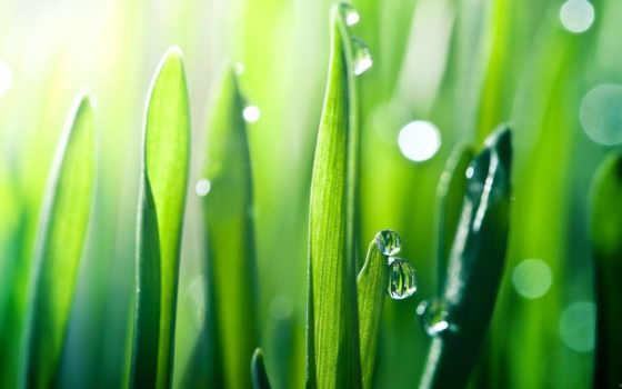 природа, трава, рассвет